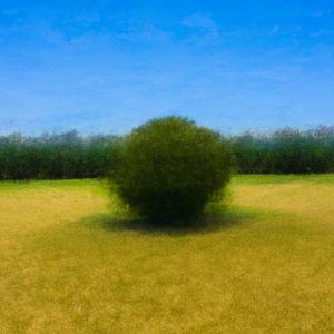 ArbreAbstrait d'un champ de blé